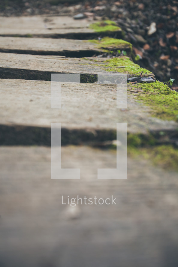 moss on stone steps