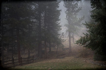 fog, fence, and trees outdoors