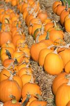 pumpkins on hay bales