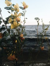 flowers growing along a shore