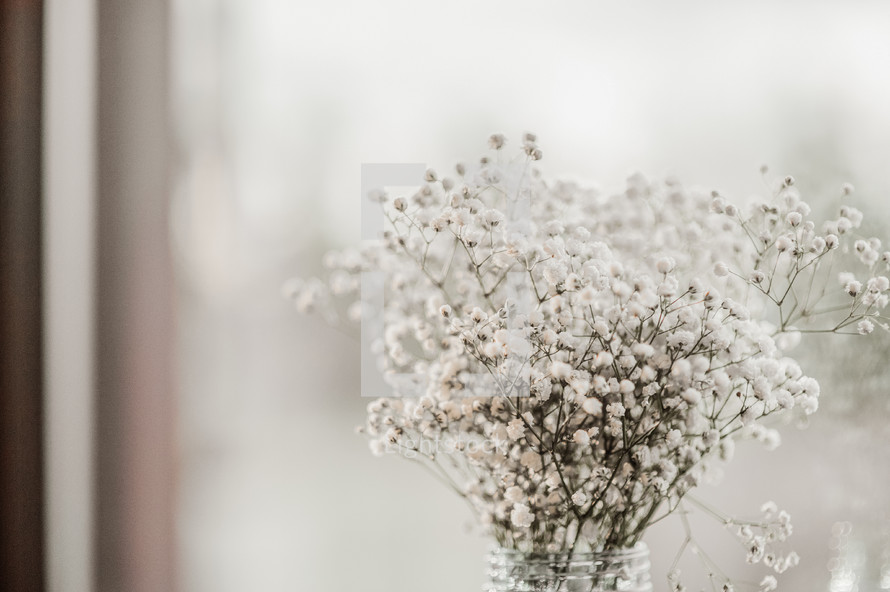 tiny white flowers in a vase