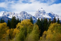 snow capped mountain peaks above a forest