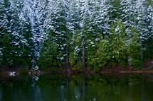 snow on trees along a lake shore