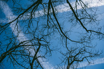 bare tree branches and blue sky
