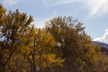 tops of fall trees