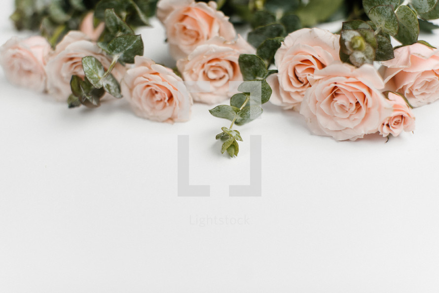 pink roses as a top border