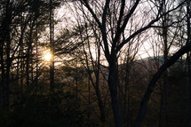 sunburst in a forest of bare trees