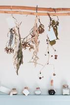 drying plants