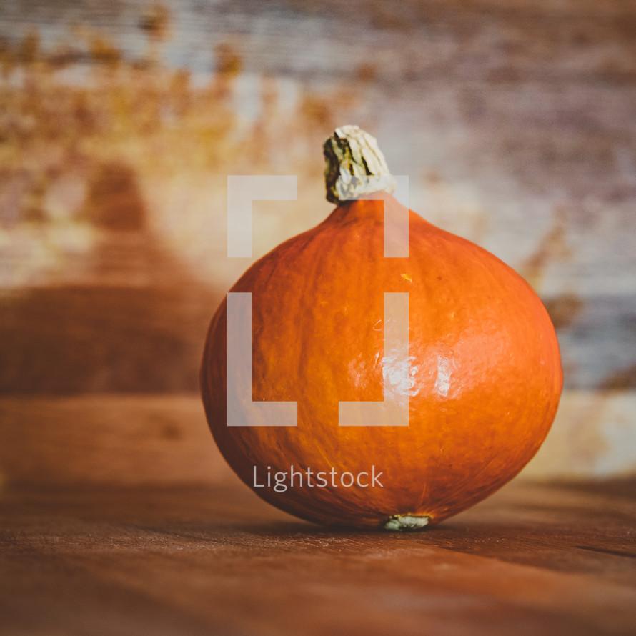 orange gourd