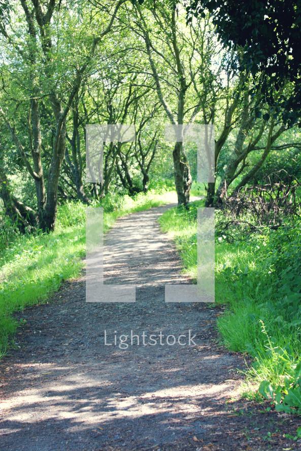 path through a forest