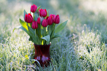 A vase of red tulips in the grass.