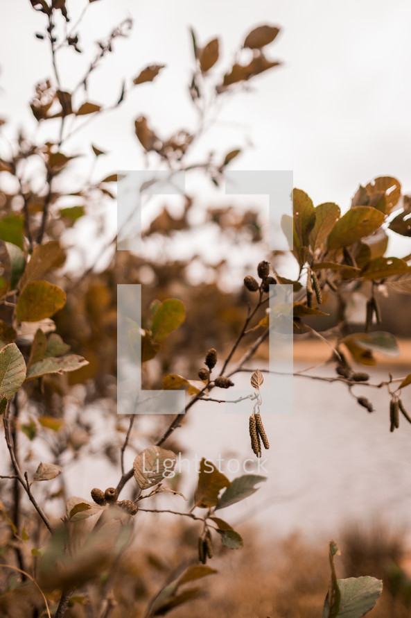 leaves on a bush in fall