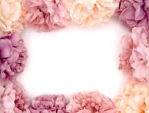 pink hydrangea border
