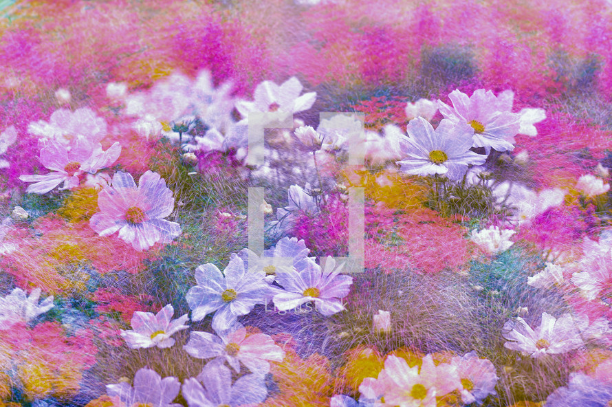 pastel colors and white flowers