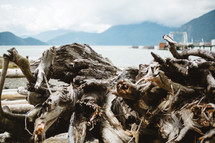 fog and driftwood on a shore