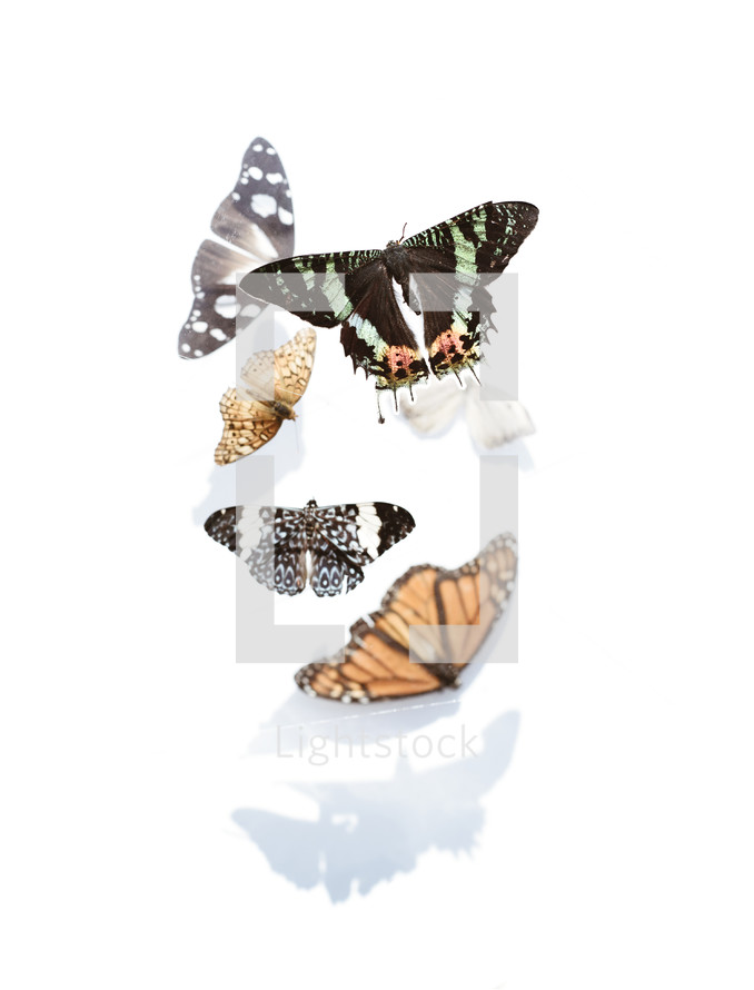 butterflies with shadows on white background