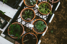 potted plants in a garden center