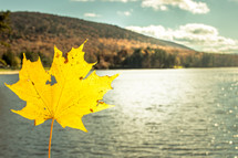 yellow leaf over a fall lake