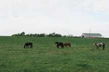 a horse grazing on a hill