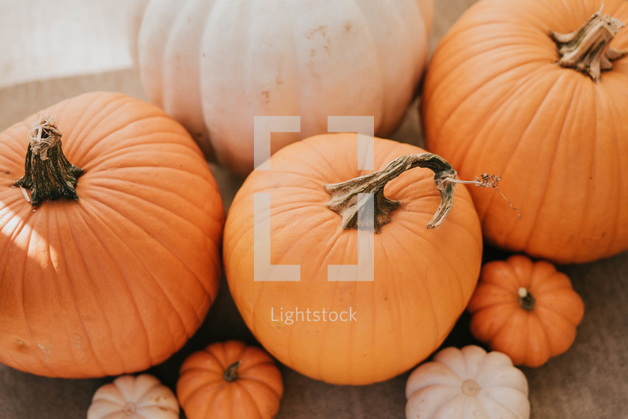 orange and white pumpkins