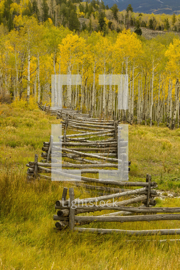 fence and fall forest