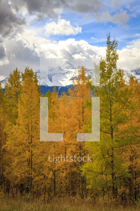 snow capped peaks and fall forest