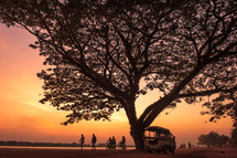 a silhouette of a tree and people walking and riding bikes at sunset