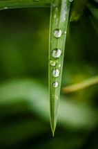 water droplets on a blade of grass