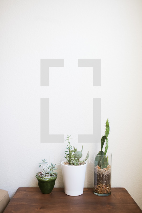 potted succulent plants and cactus
