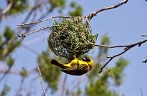 yellow bird on a nest