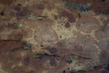 Old peeling floral wallpaper.