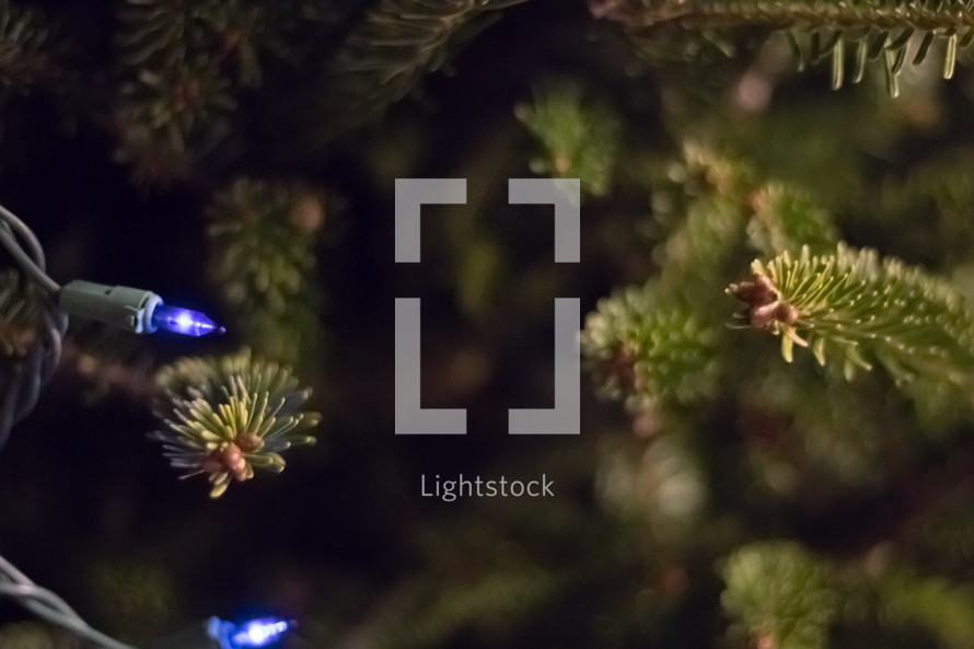 illuminated Christmas lights
