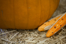 corn and pumpkin