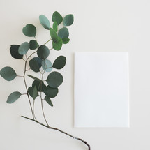 envelope and a twig with green leaves on white background