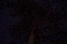 tree and stars t