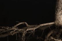 roots of a plant closeup