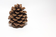 pine cone on white