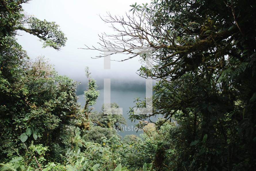 fog and dense vegetation