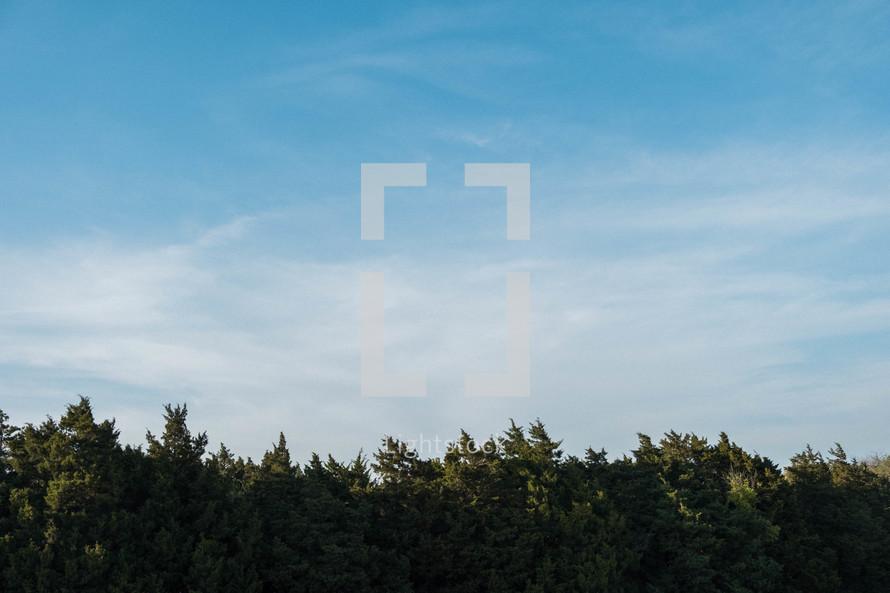 blue sky above a tree line