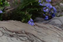 wild flowers growing in rock