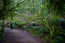 person walking on a path through a forest