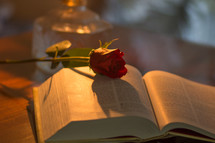 red rose on the pages of a Bible