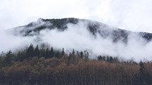 fog over a mountain forest