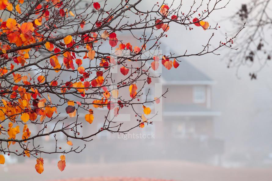 orange leaves on a tree and fog