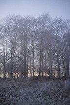 fog in a winter forest