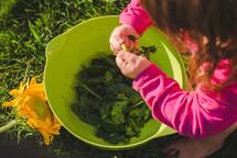 Girl picking kale.