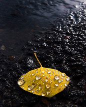 Dew on a yellow leaf resting on asphalt