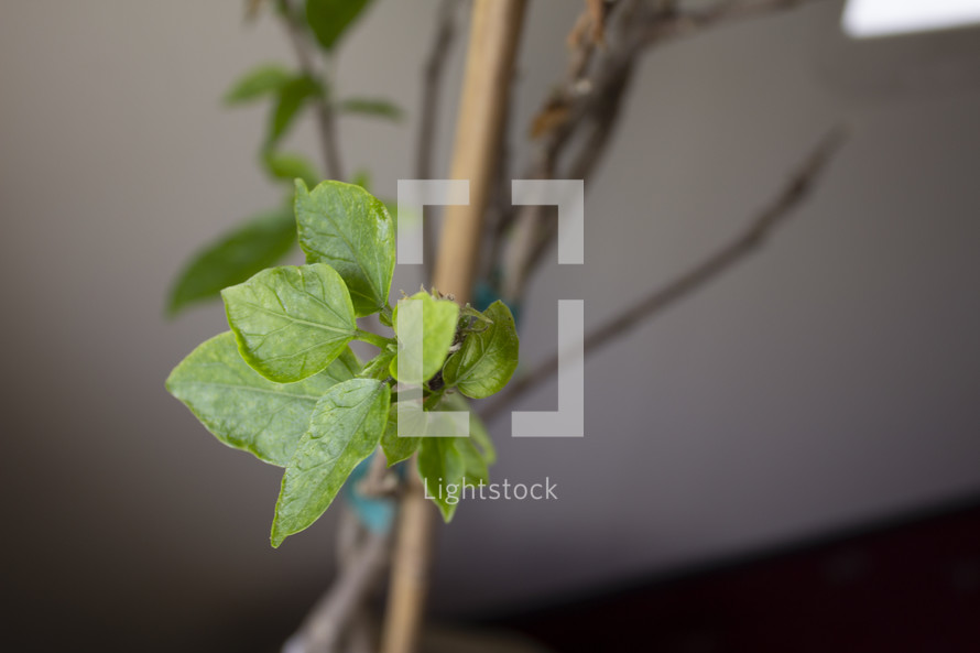 green leaves sprouting on a house plant