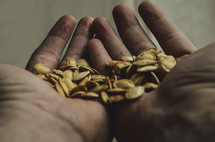 cupped hands holding pumpkin seeds