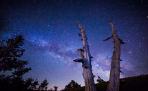 milky way and stars in the night sky above trees